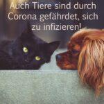 Auch Tiere sind durch Corona gefährdet, sich zu infizieren!