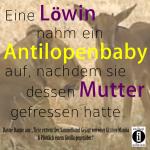Löwin nimmt Antilopenbaby auf/Spruch des Tages 13. Dezember 2019