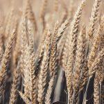 Weizenmehl und psychische Krankheiten: Ein Selbstexperiment